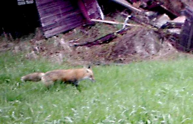 Foxbybarn
